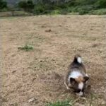 かわいいスマート犬