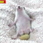 爆笑!おもしろ犬猫鳥珍ペット動物傑作ハプニング映像集#097 可愛い犬🐶猫🐱鳥🦆兎🐰キリン🦒象🐘ハムスター🐹魚🐟の愛らしい動物がいっぱい!涙と感動癒し【animalpet WORLD】