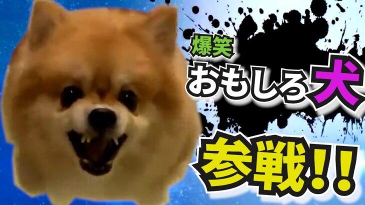 爆笑おもしろ犬🐶🐶🐶全員参戦!! Part4