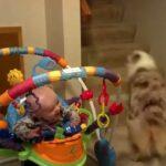 「かわいい犬と赤ちゃん」かわいい犬と笑っている赤ちゃん・ かわいい犬 , かわいい赤ちゃん #2