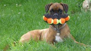 😺🐶間腹が痛いほど爆笑する犬, 猫,動物のおもしろハプニング #9